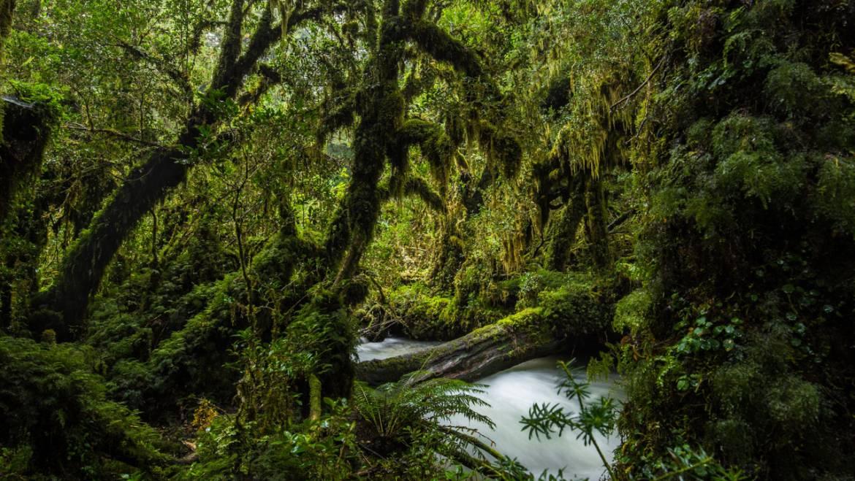 Restaurar bosques para aumentar el agua