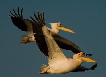 Día mundial de las Aves Migratorias, conciencia para su conservación