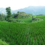 Campo con vegetacion