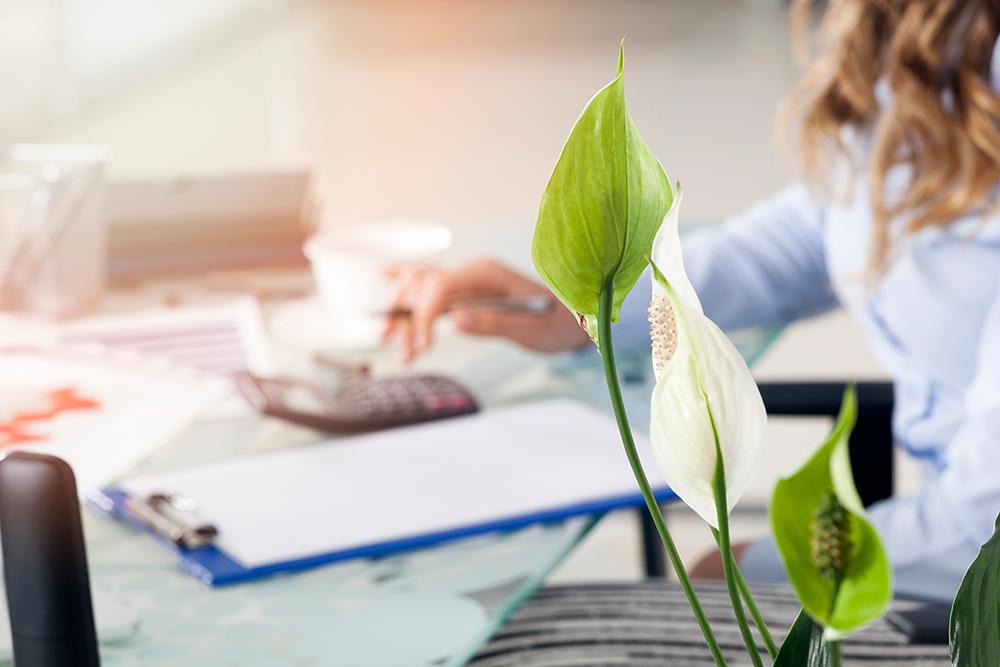 Mujer en escritorio con planta